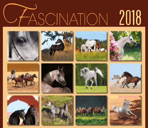 BOISELLE カレンダー2018 Lサイズ Fascination