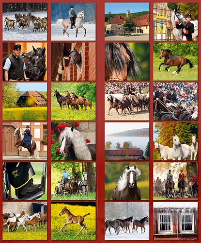 BOISELLE カレンダー2019 Mサイズ Marbach (マールバッハ)