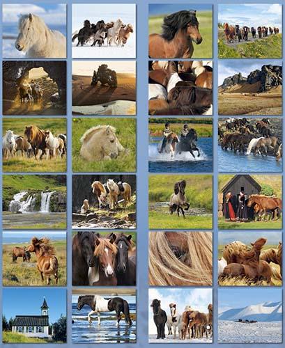 BOISELLE カレンダー2019 Mサイズ Islander (アイスランダー)