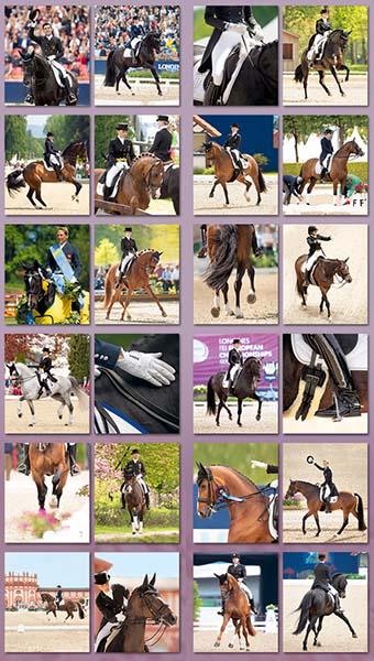 BOISELLE カレンダー2019 Sports Dressage(ドレッサージュ)